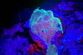 Donated Fluoro Light Image